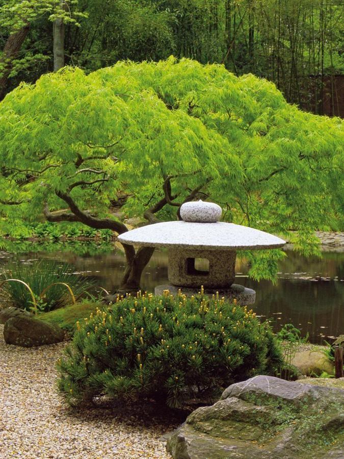 giardino giapponese Projeto de jardim japonês, Asian