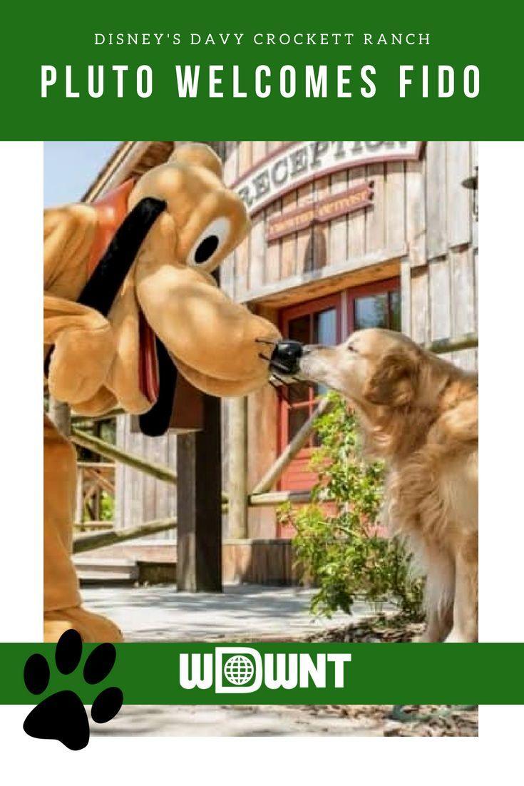 Disneyland Close Historic Calif Bungalow 9: Disneyland Paris Welcomes Dogs In Disney's Davy Crockett