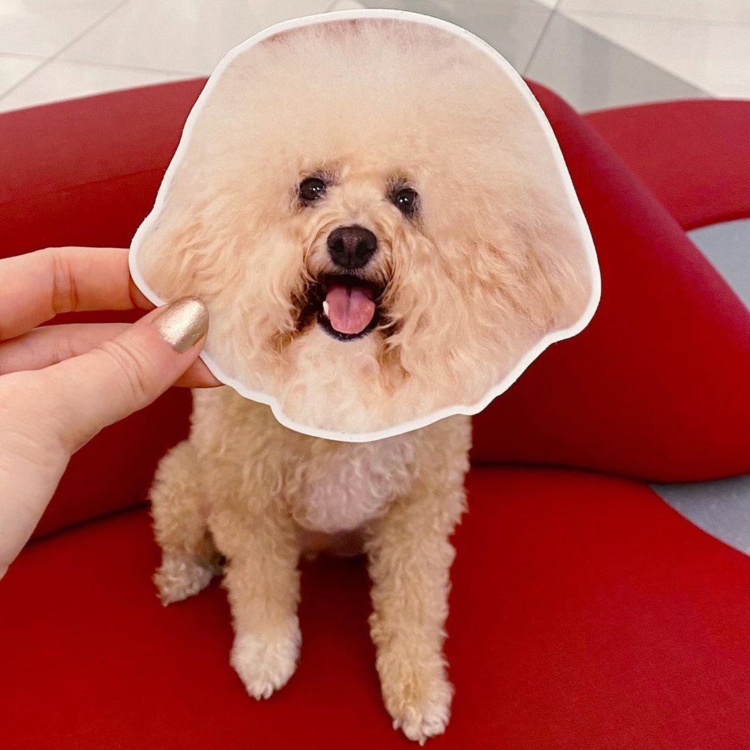 #dogmemes #dogmeme #animalsinfluence #dogsofbark #dogsbeingbasic #doggosdoingthings #dogmomsofinstagram #dogsofnyc #doodlesoftheworld #doodlesofinstagram #mondaymood #doodlepuppy #bichonfrise #poodlepuppy #funnydog #dogmomlife #fluffydog #floof #cutestdogs #hairgoals #doggosdoingthings #doglife #dogsofinsta #fluffypuppy #customize #puppylove🐶 #barked #stickeraddict #entertowin