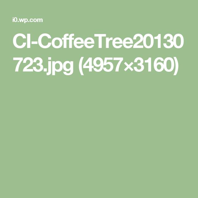 CI-CoffeeTree20130723.jpg (4957×3160)