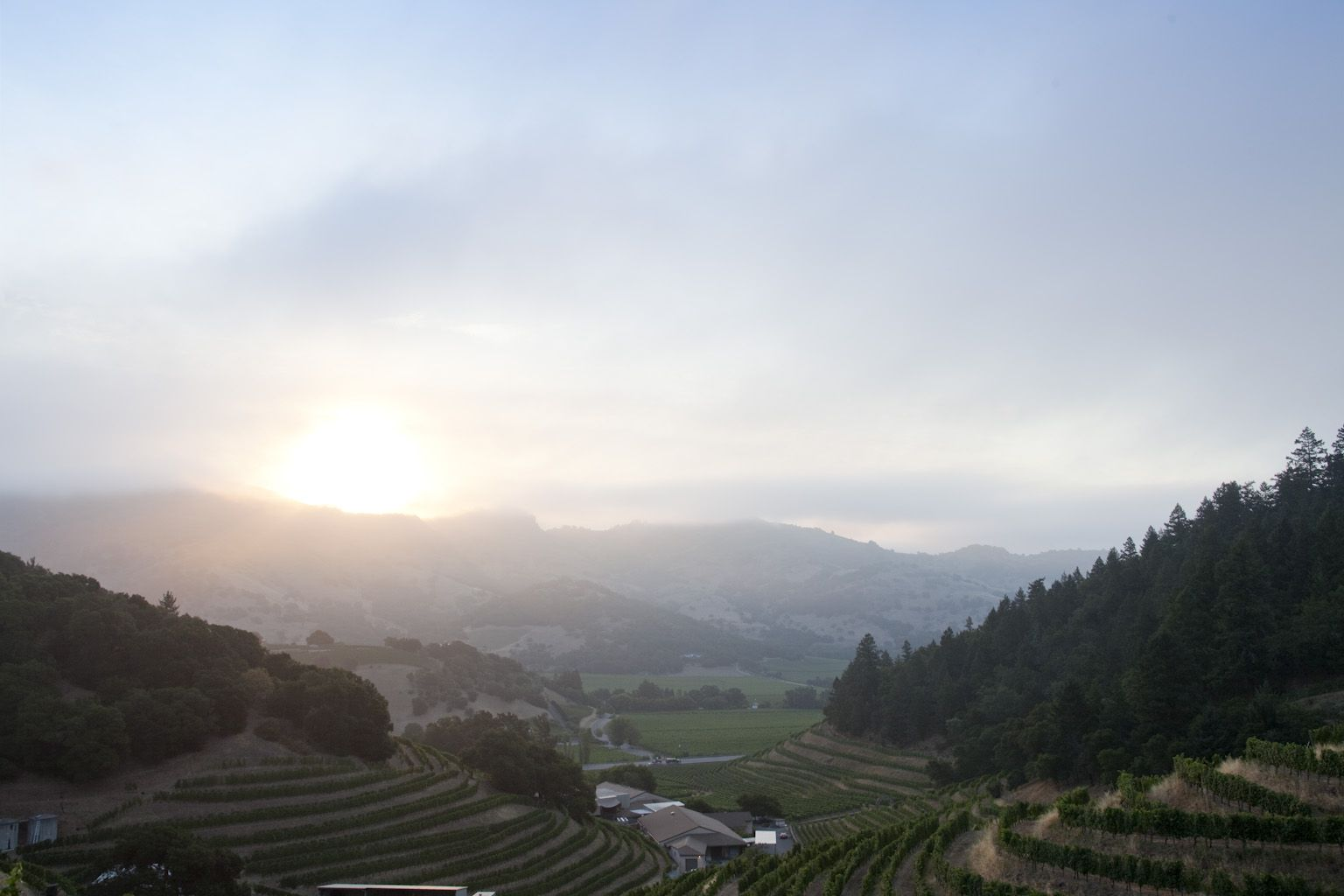 Sun rise from above Pine Ridge Vineyards, | The good place ...