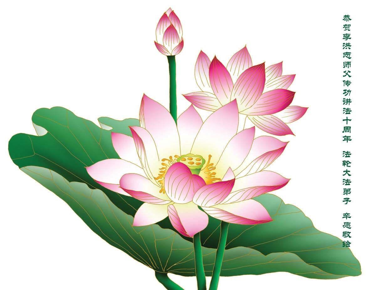 Lotus Flower Lotus Flower Proud In The World Art Lotus Art Lotus