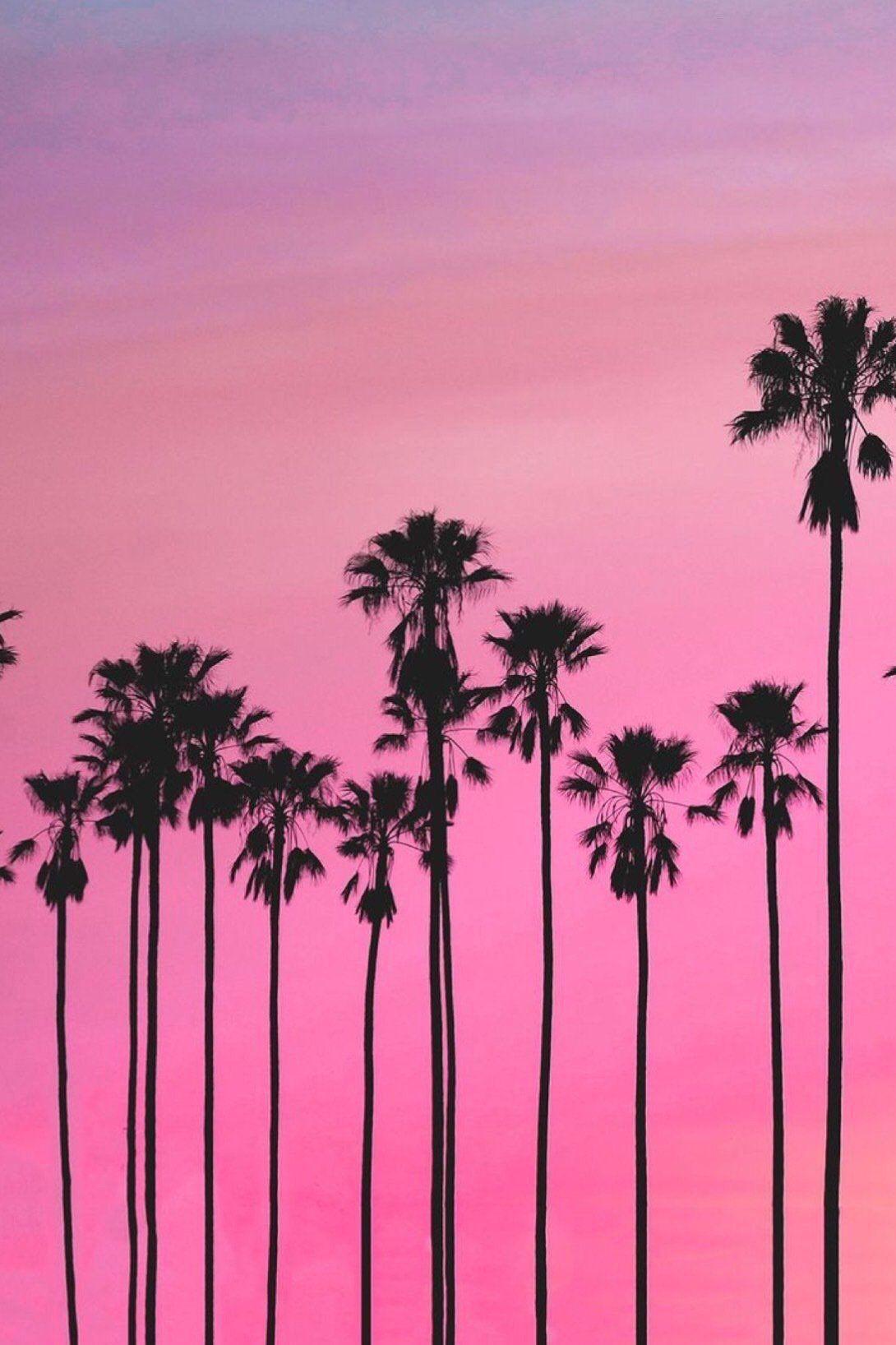 Pink Palm Sunset Wallpaper Tree Sunset Wallpaper Palm Trees Wallpaper