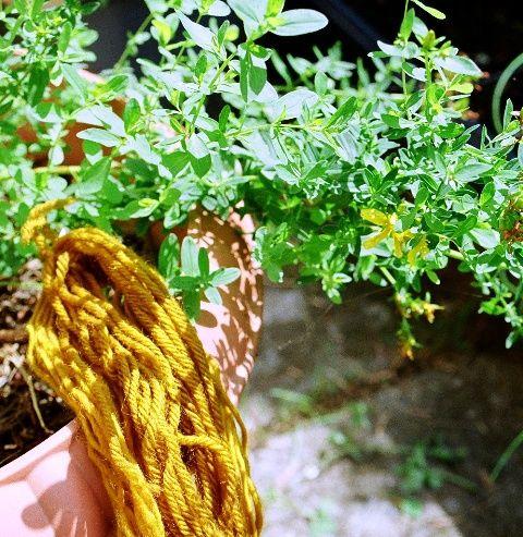 Krydderuglen: Plantefarver -- Plant Dye Perikon
