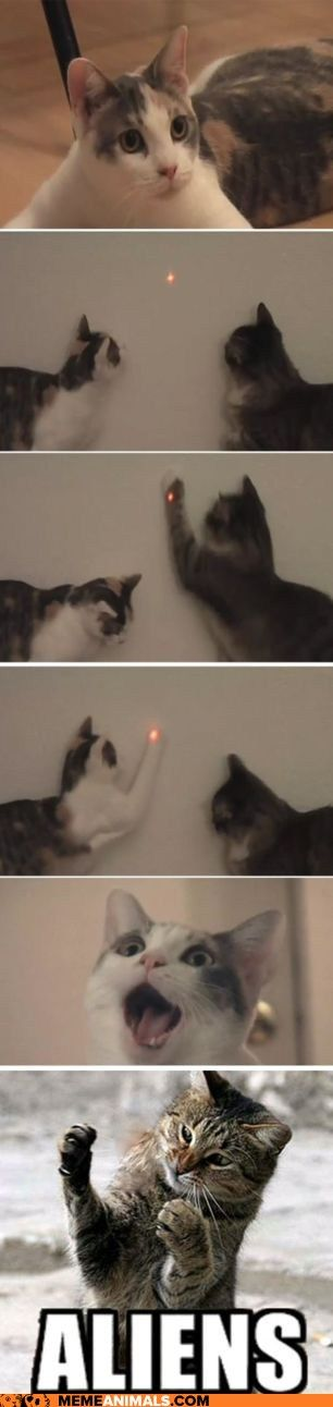 ah, the ever confusing red dot... Kota and Holly are sure we are being invaded!