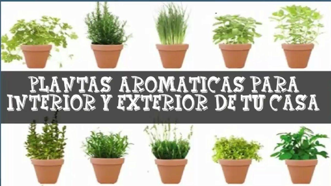Plantas arom ticas de interior y exterior de casa for Asociacion de plantas aromaticas