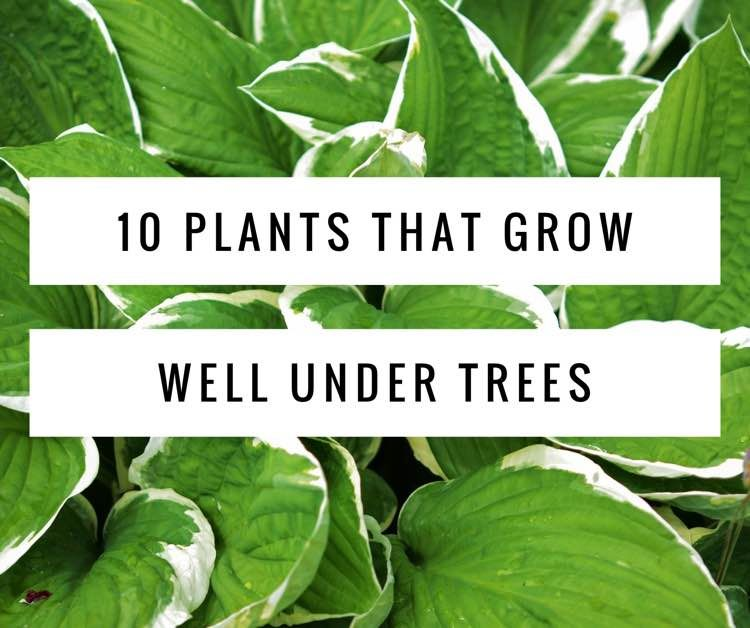 Plants That Grow Well Under Trees Evergreen Landscaping And