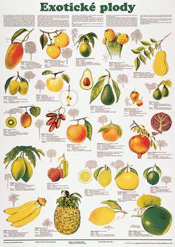 exotické plod