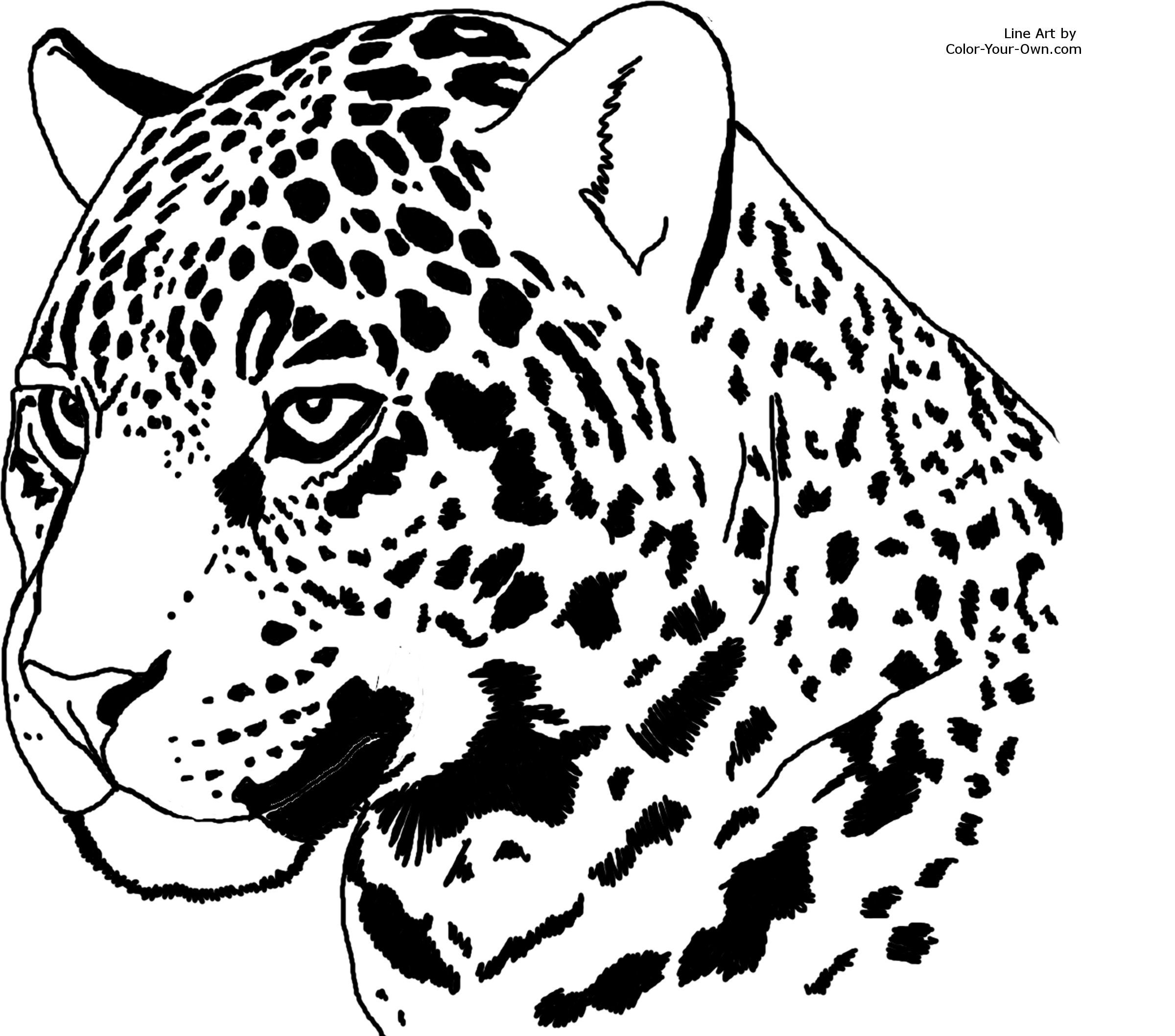 Jaguar Coloring Pages Big Cats Art Animal Line Drawings Jaguar