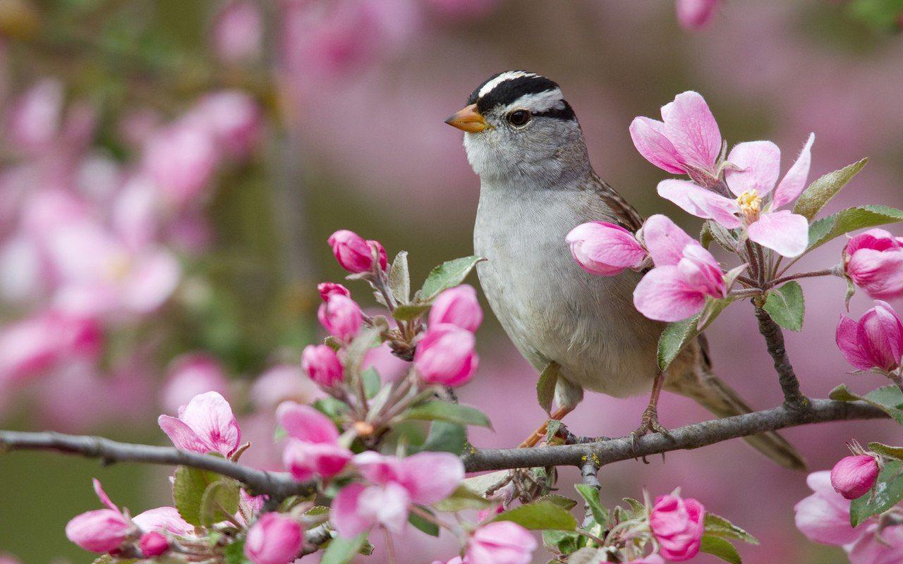 Prekrasnyj Mir Prirody Cvety Zhivotnye S Izobrazheniyami Oboi