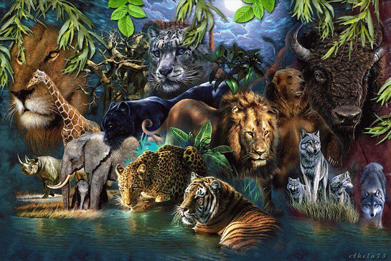 The Mountain BIG JUNGLE CATS Leopard Black Panther Tiger Lion T-Shirt S-3XL 9696ec769d1b