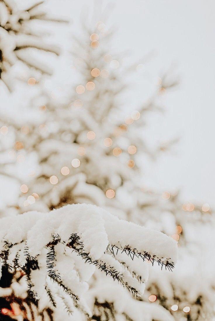 𝘱𝘪𝘯𝘵𝘦𝘳𝘦𝘴𝘵 𝘨𝘢𝘣𝘳𝘪 Christmas Phone Wallpaper Winter Wallpaper Holiday Wallpaper