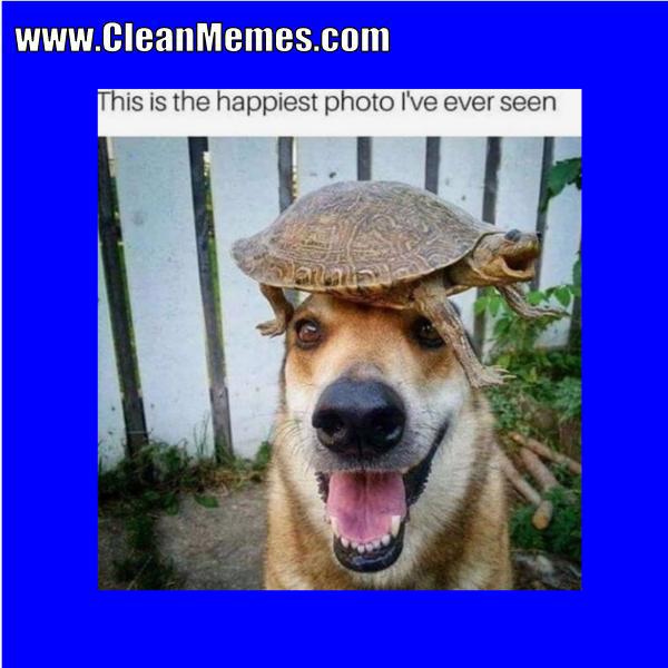 Http Www Cleanmemes Com Dog Memes Cute Animals Animals Friendship