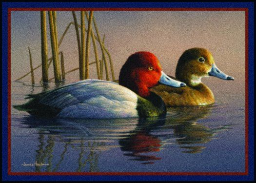 Northern Shoveler Duck Print 11 x 14 by Doug Walpus Birds Wildlife Art