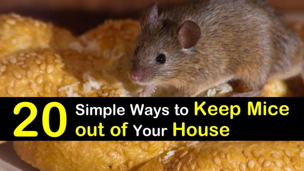 how to control mice in your home