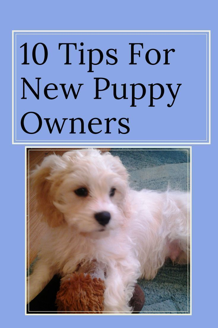 puppy first day home tips