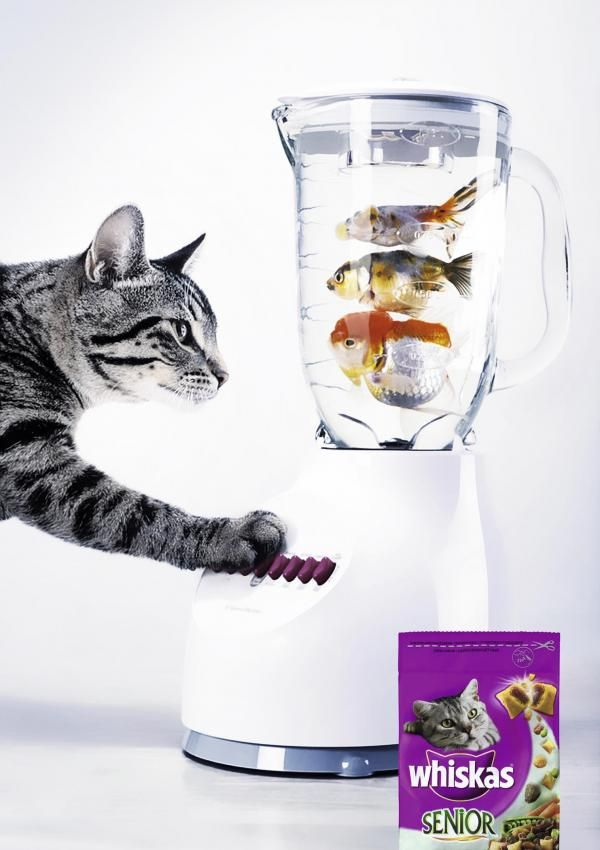 Whiskas cat food ad 1 Cat / Whiskas product / Ads