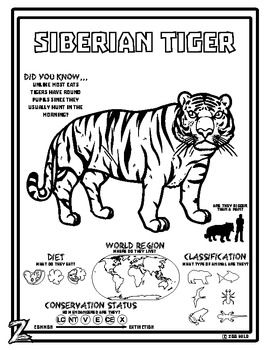 Captivating Siberian Tiger    10 Resources    Coloring Pages, Reading