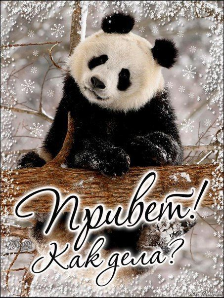 Мерцающие открытки панда