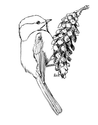 Carolina Chickadee coloring page from Chickadee category. Select from 25143 printable crafts of cartoons, nature, animals, Bible and many more.