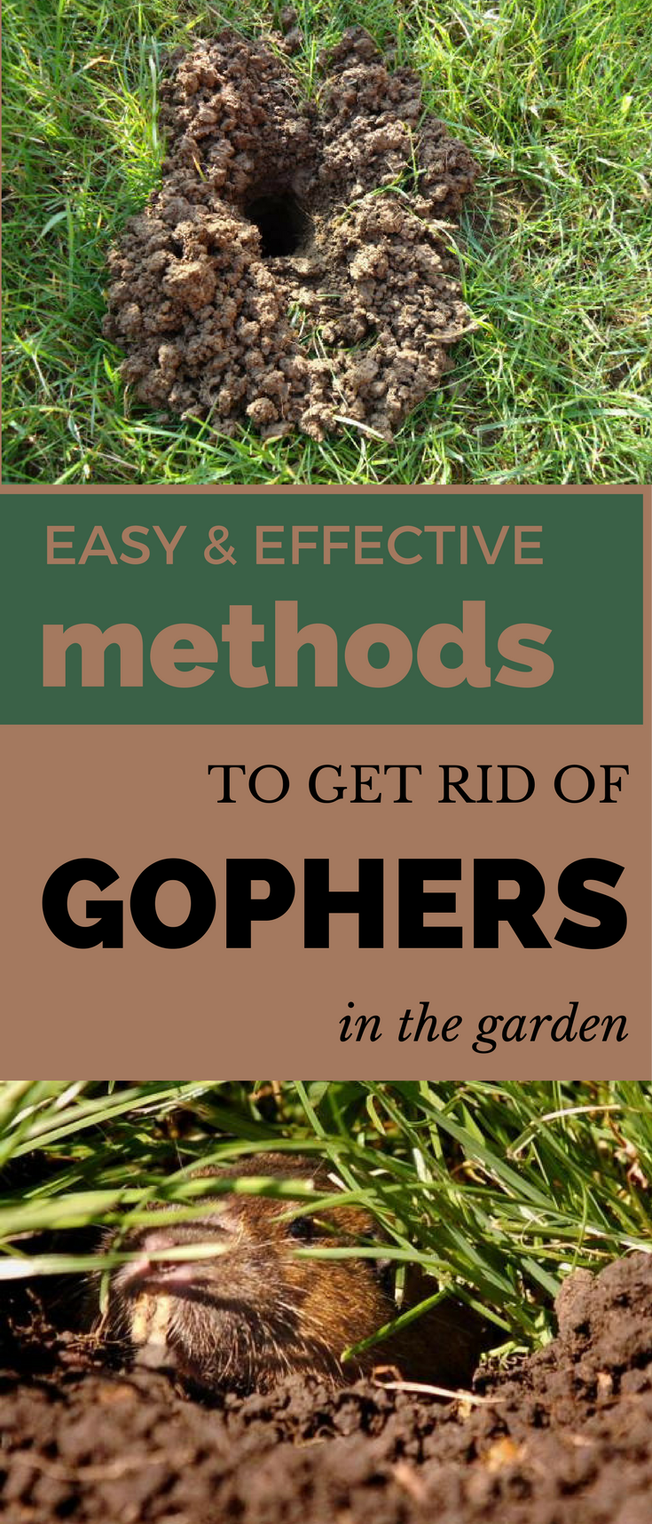 Here Are 4 Easy And Effective Ways To Get Rid Of Gophers In The Garden