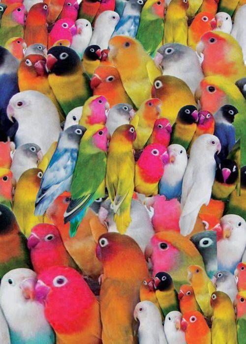 Loros De Diferentes Colores Birds Beautiful Birds Pretty Birds