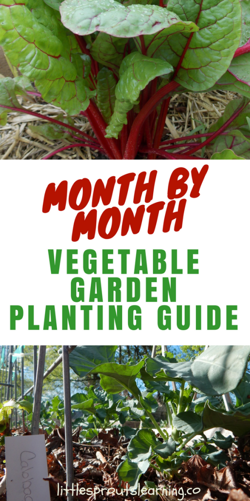 Month by Month Vegetable Planting Guide for Gardeners is part of Vegetable garden planting guide, Vegetable garden planner, Vegetable planting guide, Garden plants vegetable, Planting vegetables, Organic vegetable garden - It's hard to keep track of what to plant when in the garden, so check out this zone 7 vegetable garden planting guide to what you grow in the garden when