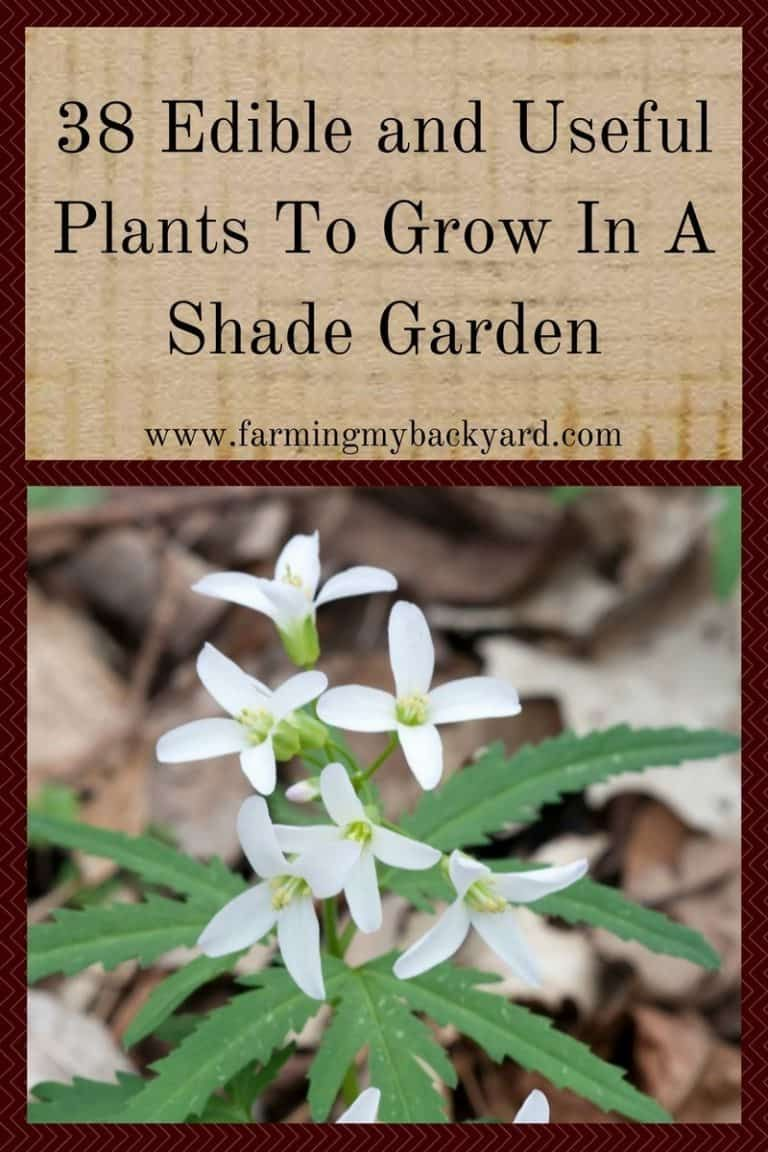 38 Edible and Useful Plants To Grow In A Shade Garden - Farming My Backyard