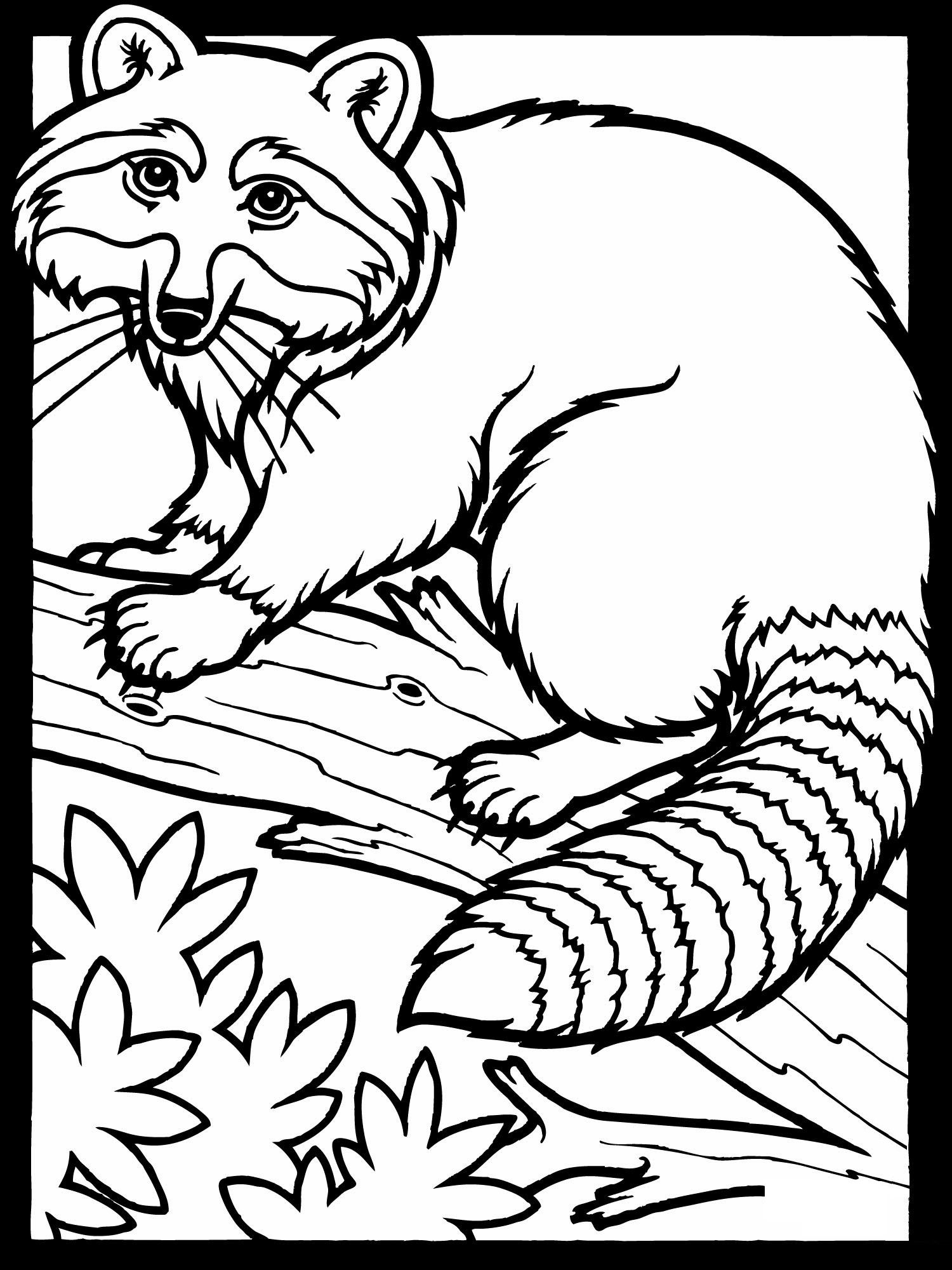 Free Printable Raccoon Coloring Pages For Kids | Creation ...