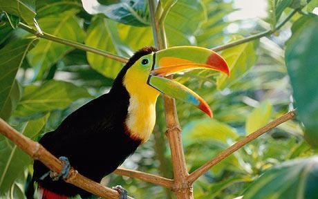 Panamá fauna es común y bonita