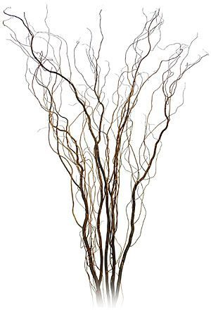Twisted Contorted Willow Sticks Pods Amp Berries In 2019 Willow Branches Curly Willow Flowers