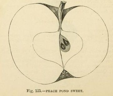 peachpond