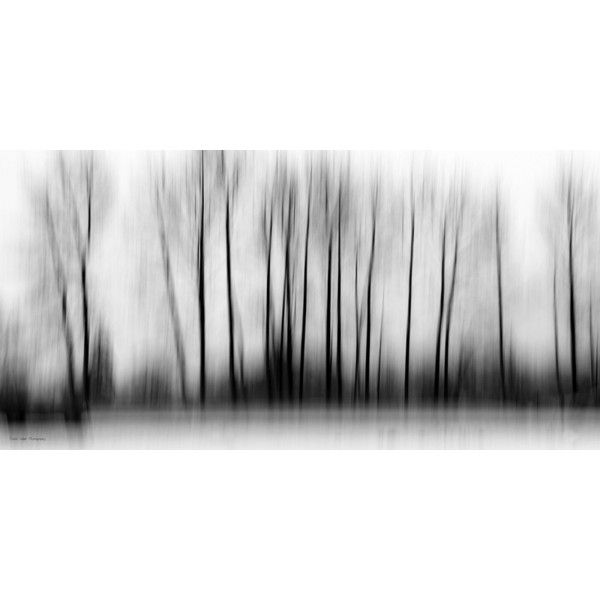 Fable Forest   Wall Art And Decor   Accents   Products   Urban Barn via Polyvore