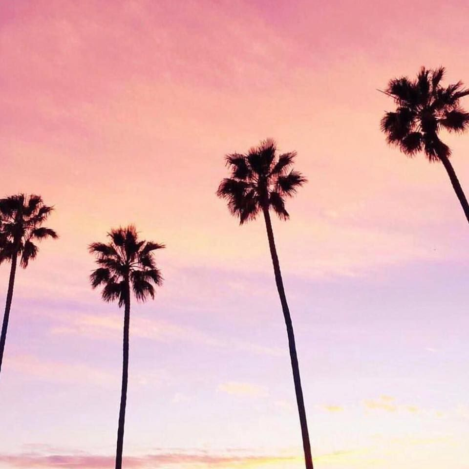 30 day get fit california palm trees palm tree sunset