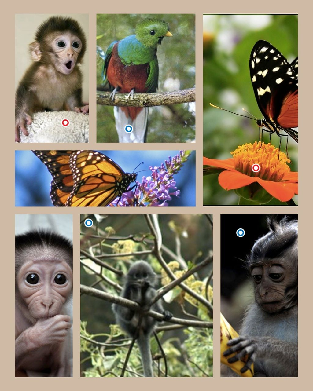 How Can We Use Pic Collage And Thinglink Apps To Practice