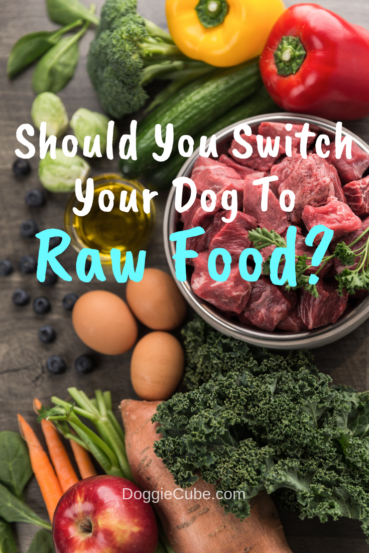 Should You Switch Your Dog To Raw Food Raw Dog Food Recipes Raw Dog Food Diet Raw Food Recipes