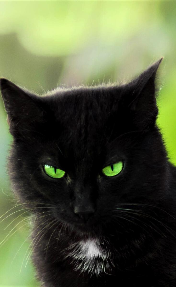 Green Eyes In 2020 Black Cat Anime Black Cat Illustration Cat Aesthetic