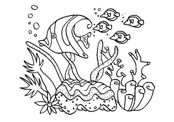 A Group of Fish in Coral Reef Sea Animals Coloring Page | Kids Tag ...
