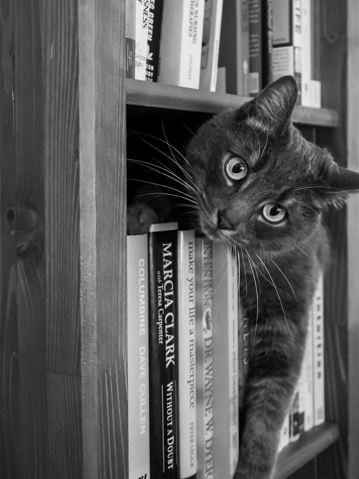 *This shelf is my reading material. (by Josev)