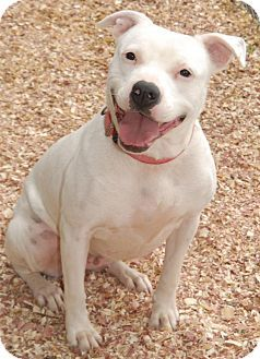 Pin By Uber Wagmore On Tennessee Pets In Need Of Adoption Or