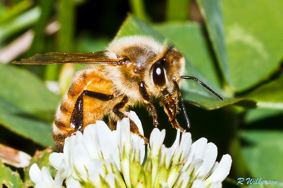 Buzy  #500px #nature #photography #photos #bees please visit and vote