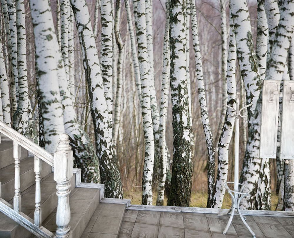 Birch Trees Abound In Our 7 Panel Photomural Easily Accessorizing With Modern Black And White