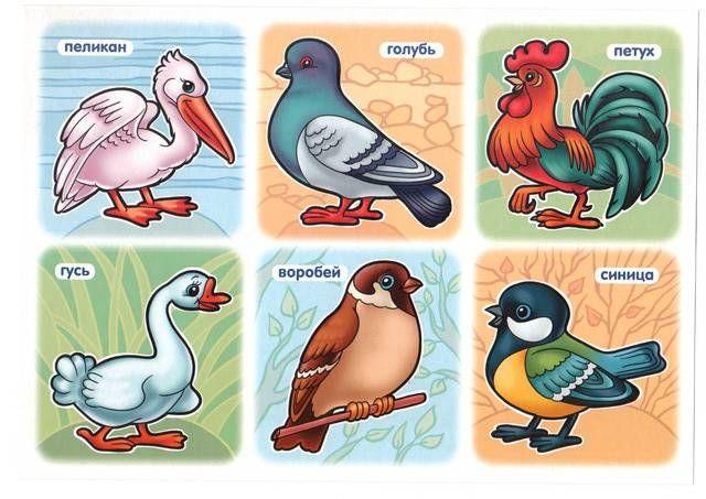 картинки для детей птицы