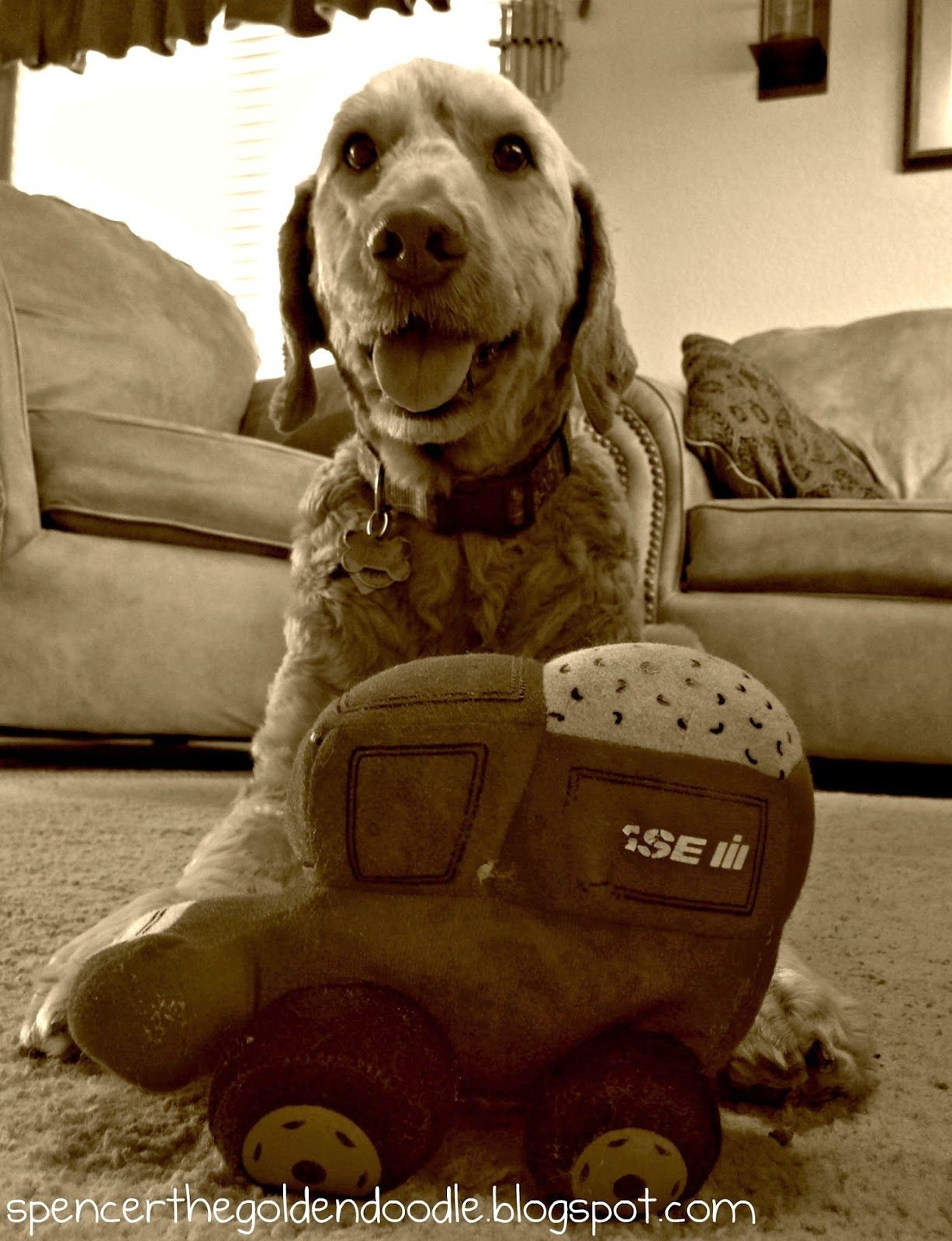 Sepia Saturday Ready. Set. Play. Goldendoodle, Tractor