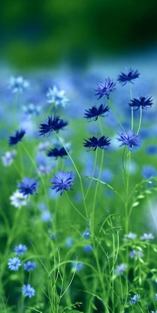 Photo of earthly enchantement – enchantement couleur bleue #meadowgarden #meadow #garden