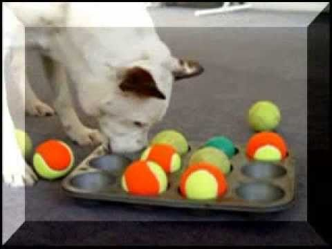 Cheap Homemade Dog Toys and Games