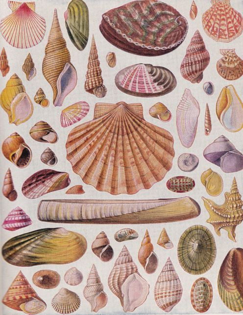 List of Shellfish | Identifying All Of The Beautiful Shells Of The World