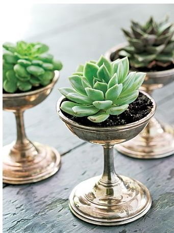 Succulents Are Also Perfect As Decor On A Dining Table Setting And Really Beautiful For The Season To Come Placed In Small Vas Succulents Succulents Diy Plants