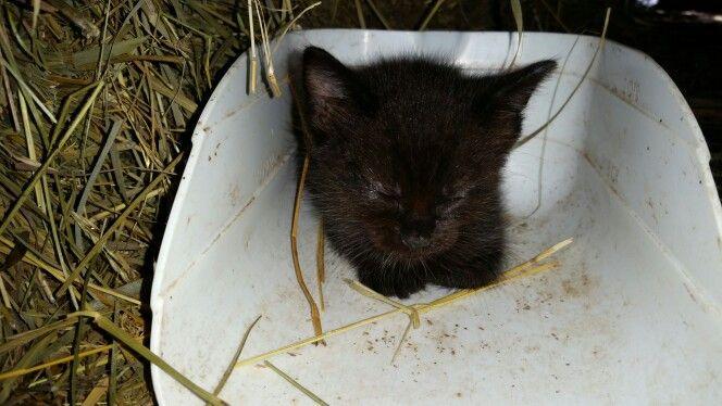 A true farm cat! Sleeping in a feed scoop.