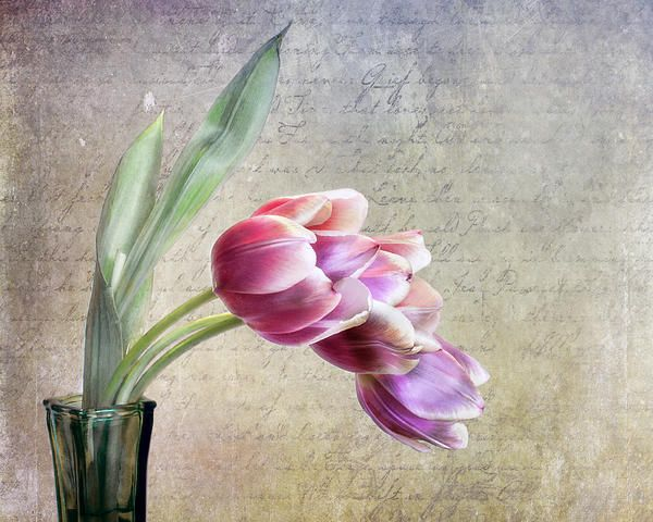 Title  Tulips And A Love Letter   Artist  David and Carol Kelly   Medium  Photograph - Photograph